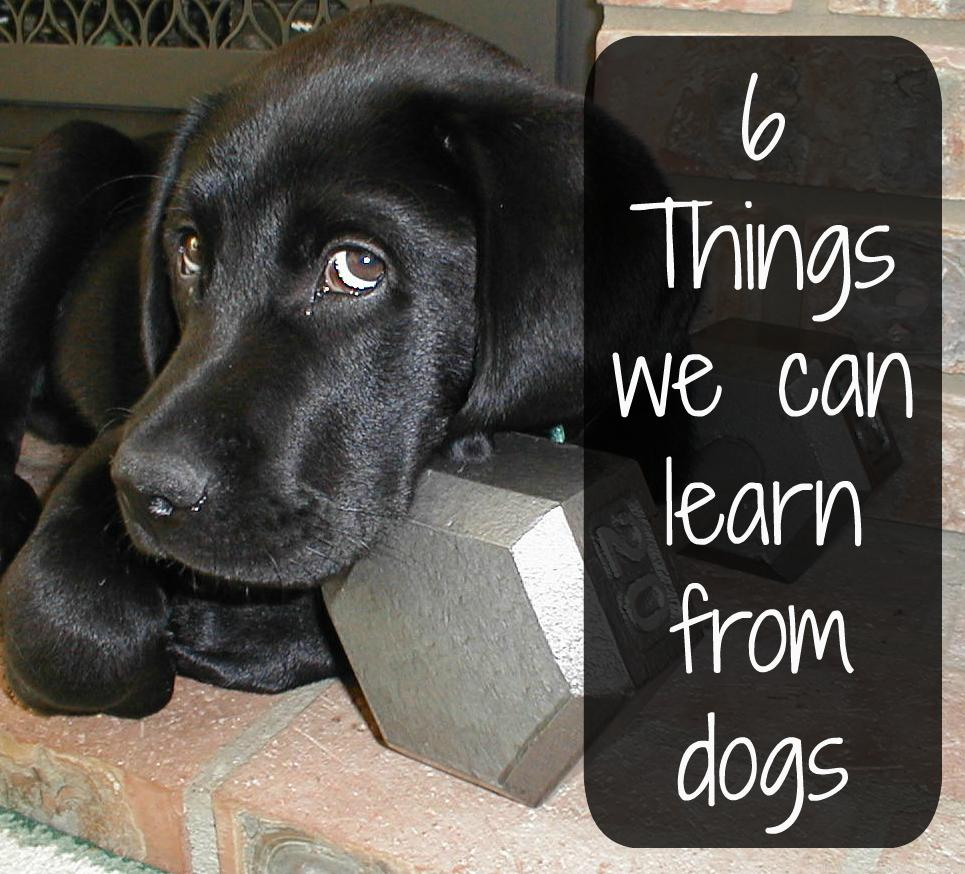 What Inspires Me: 10 Life Lessons We Can Learn From Dogs